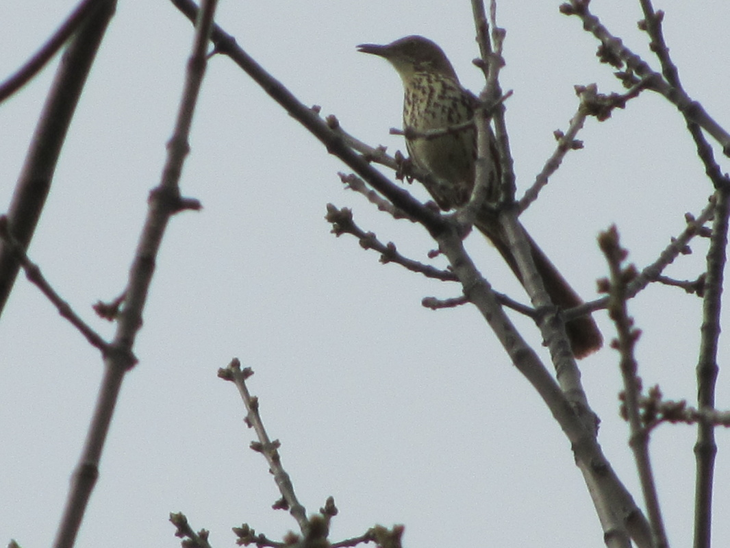 Pictures From Pokagon Midwest Bird Watching